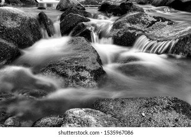 A stream deep in the forest, black and white