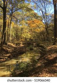 Stream in fall in Mississippi