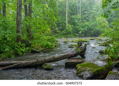 Stream and fallen tree in rainy forest landscape