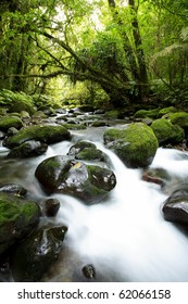 Stream flowing in lush New Zealand tropical forest