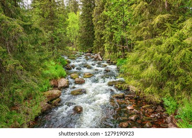 Stream flowing through a beautiful coniferous forest