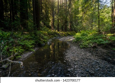 A stream flows under the shade of the Redwoods in Muir Woods near San Francisco, California, United States.