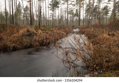 Stream in forest photograped in early spring