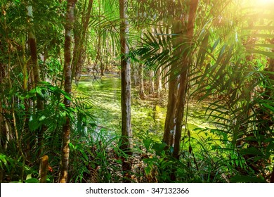 Stream in green tropical forest with sunlight