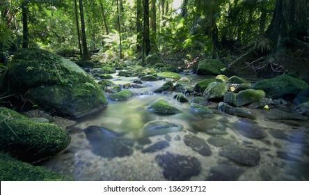 Stream at Mossman Gorge, Port Douglas