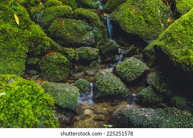 Stream and mossy rocks in Yakushima, Japan