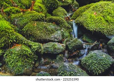 Stream and mossy rocks in Yakushima, Japan