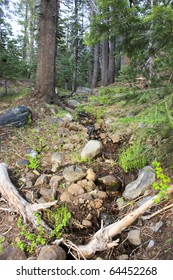 Stream near the campground in Devil's Postpile National Monument, California.