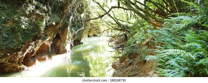 The Stream Outside the Waitomo Glowworm Caves