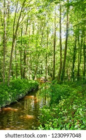 A stream is running through a forest