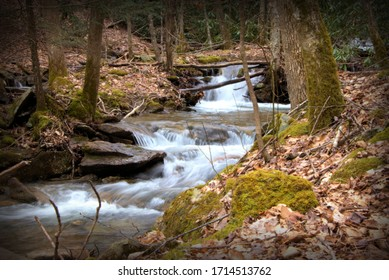 stream running through a forest