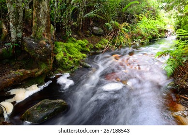 Stream running through indigenous forest  - South Africa