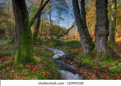 A stream running through trees at Bolderwood in the New Forest.