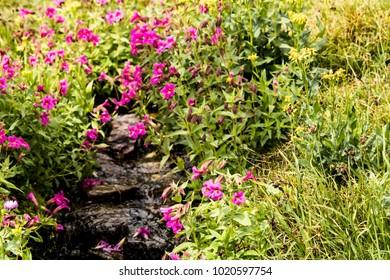 Stream Running through Wildflowers