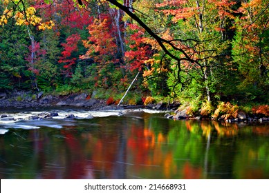 A stream runs though a colorful forest during the autumn season reflecting the colors of the trees.