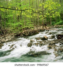 Stream rushes through forest in Smokey Mountains