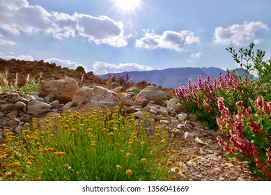 The Tze'elim Stream situated in the Judean Desert, Israel, near Masada, descending the Dead Sea in the end of Winter time.
