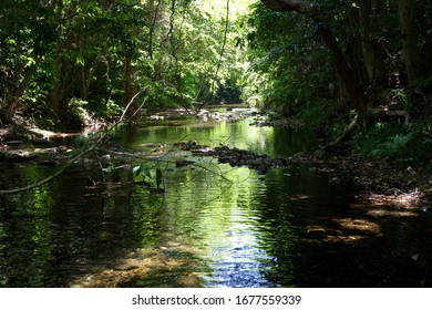 A stream surrounded by tropical rainforest of the Daintree at Cape Tribulation north of Cairns, Queensland, Australia.