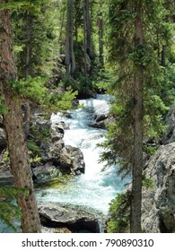 Stream through the trees - Yellowstone National Park
