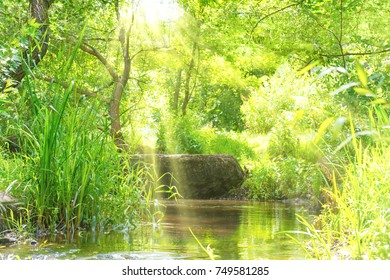 Stream with water in tropical forest with sun rays