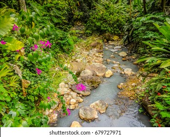 A stream from a waterfall in the Botanical Gardens in Saint Lucia