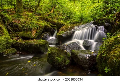 Stream waterfall in a mossy forest. Mosy rocks in forest creek. Forest creek flowing. Cold creek in mossy forest