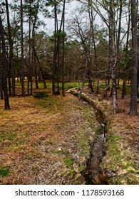 Stream in Woods in The Woodlands TX