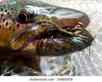 Streamer Eater