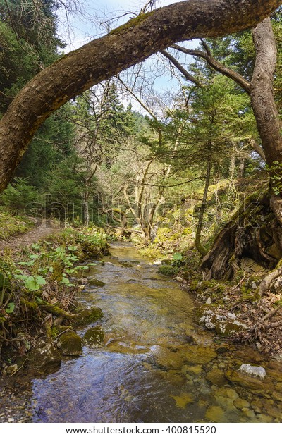 Streamlet Forest Pavliani On Oeta Mountain Stock Photo (Edit Now