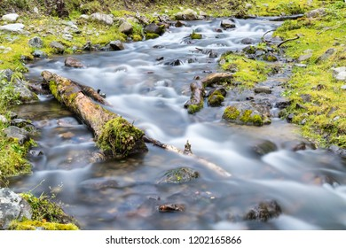 streams closeup in the forest, beautiful natural scenery