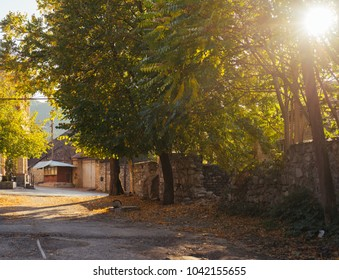 street in the background of trees on a sunny day