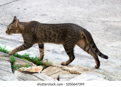 Street cat isolate on blackground,front view from the top, technical cost-up.