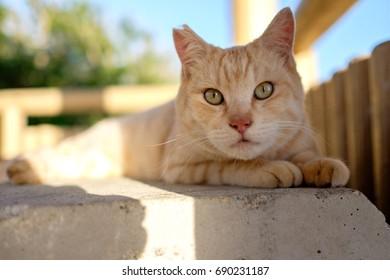 street cat in Japan