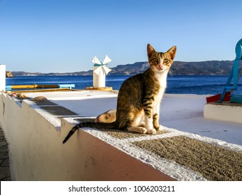 Street cat in Klima village, in Milos island, Cyclades, Greece.