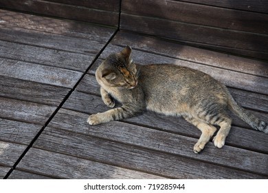 street cat lay on the ground