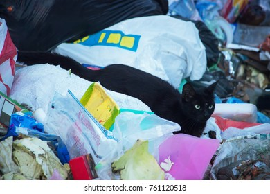 A street cat is looking for food in the garbage