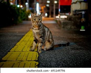 street cat at night