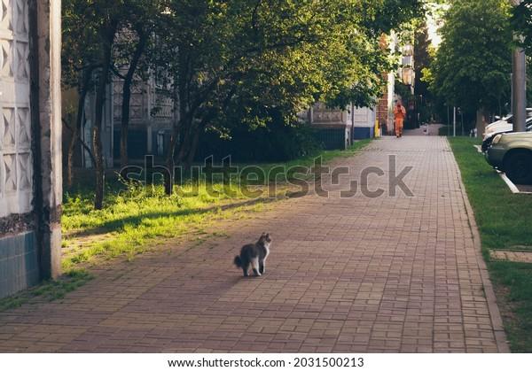 street-cat-on-sidewalk-evening-600w-2031