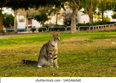 street cat portrait sitting in funny pose on a green grass meadow park outdoor space