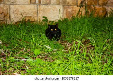 Street cat roaming in the garden in Jerusalem on afternoon