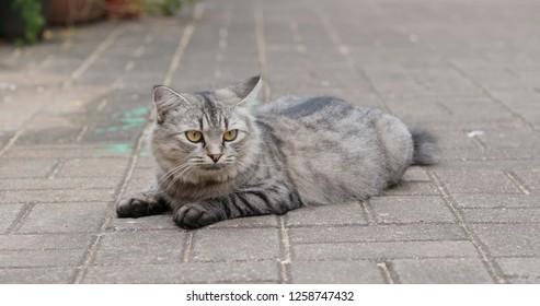 Street cat sit on the ground