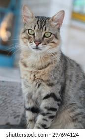 Street Cat Sitting