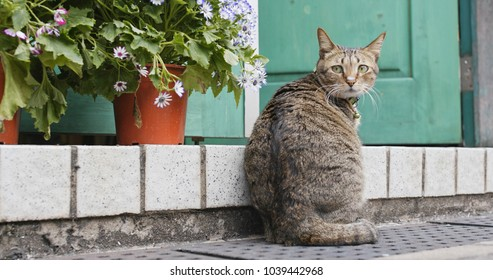 Street cat sitting at outdoor