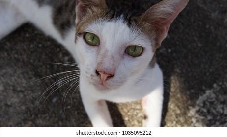 street cat in temple