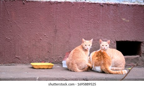 street cats eat on steet color