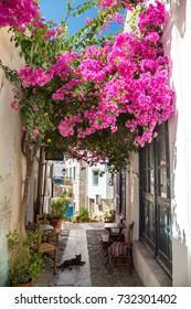Street cats in the narrow streets of Ermoupolis, Syros, Greece