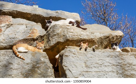 Street cats in the sun among the rocks.