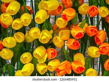 Street decor 'Wall of Tulips'. Nauryz. Almaty, Kazakhstan. Artificial flowers. Closeup