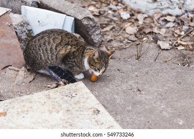 Street dirty cute kitten eats sausage.