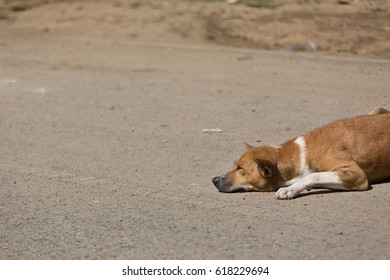 Street dog.